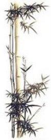 Bambooborder2